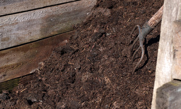 Working in the garden: compost pile with a rustic pitchfork
